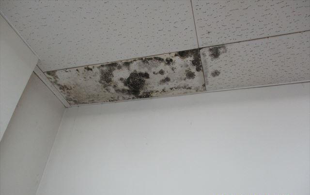 カビが生えた天井